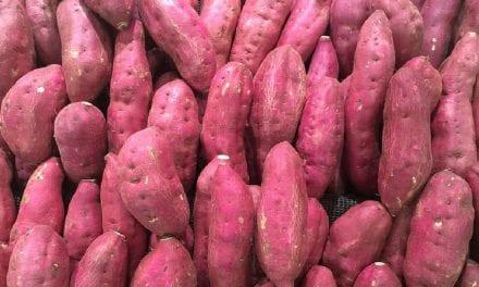 How to Grow Japanese Sweet Potato