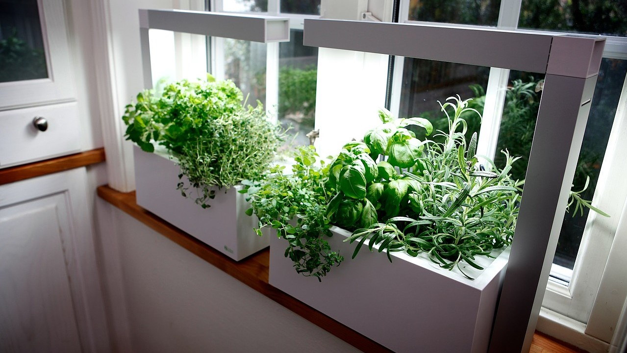 How to Keep Bugs off Indoor Hydroponic Plants