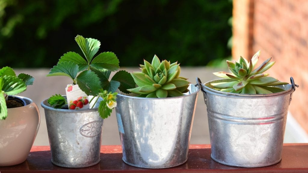 How to Wrap a Potted Plant With Burlap