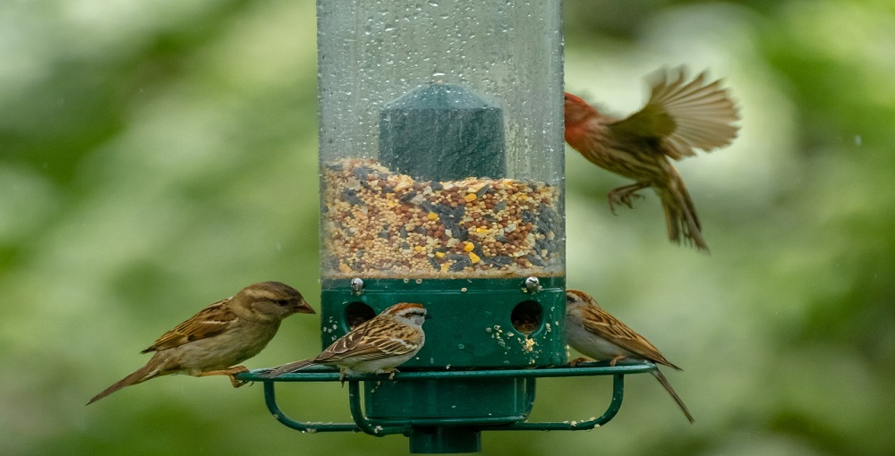 How Do You Keep Bird Seed from Molding01