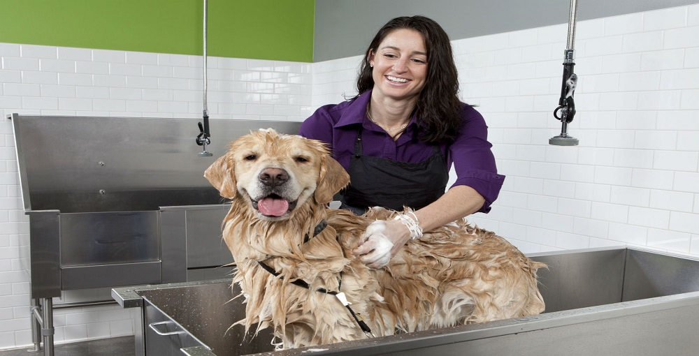 How to Keep Daily Puppy Clean Without Bathing 1
