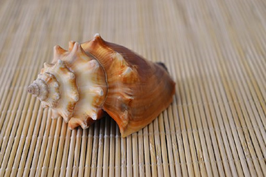How to Get Conch out of Shell without Breaking-1