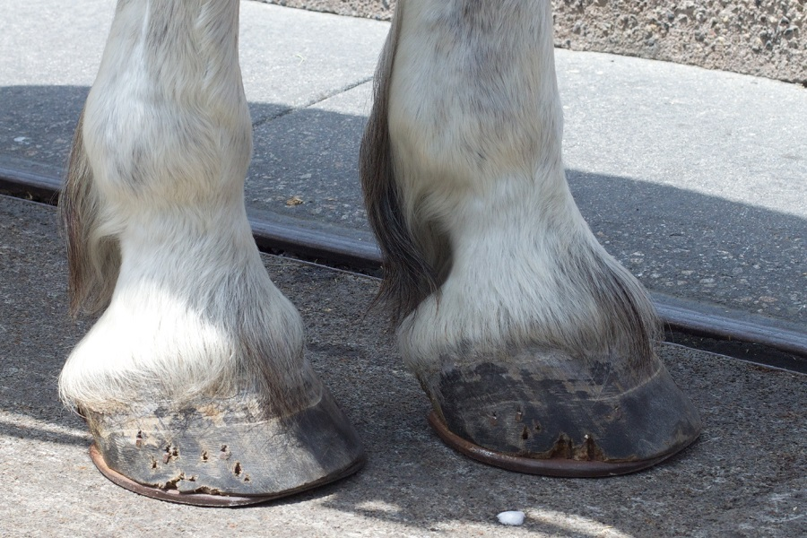 How to Make Hooves for a Costume-2