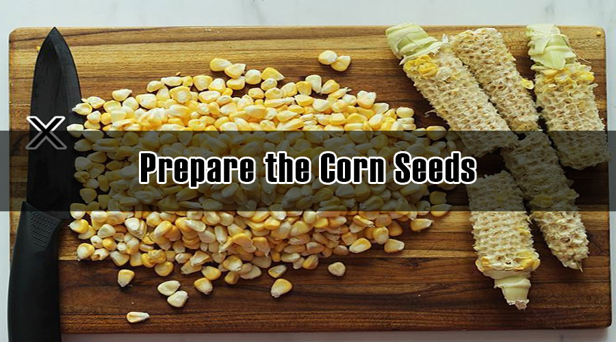 Prepare the Corn Seeds