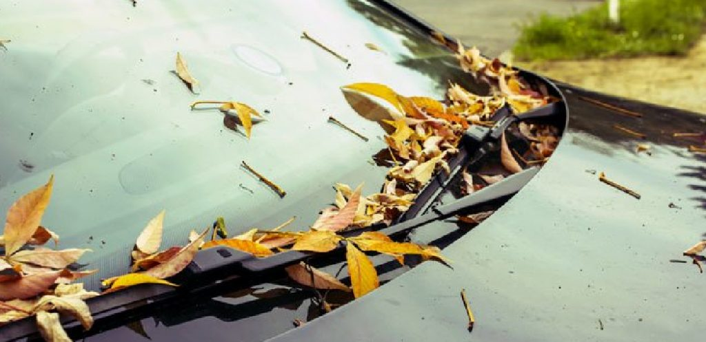 What Does Tree Sap Look Like on a Car