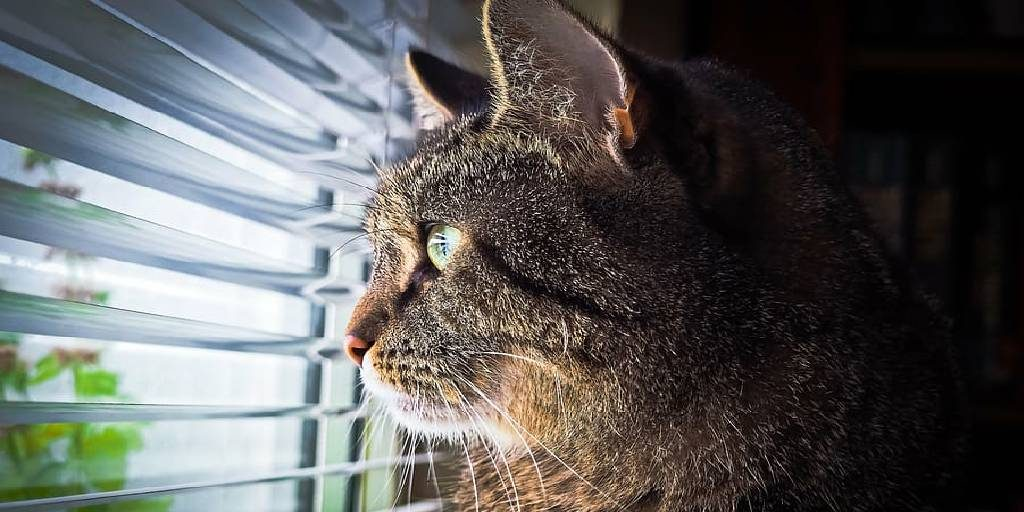 How to Keep Cats Out of Window Blinds