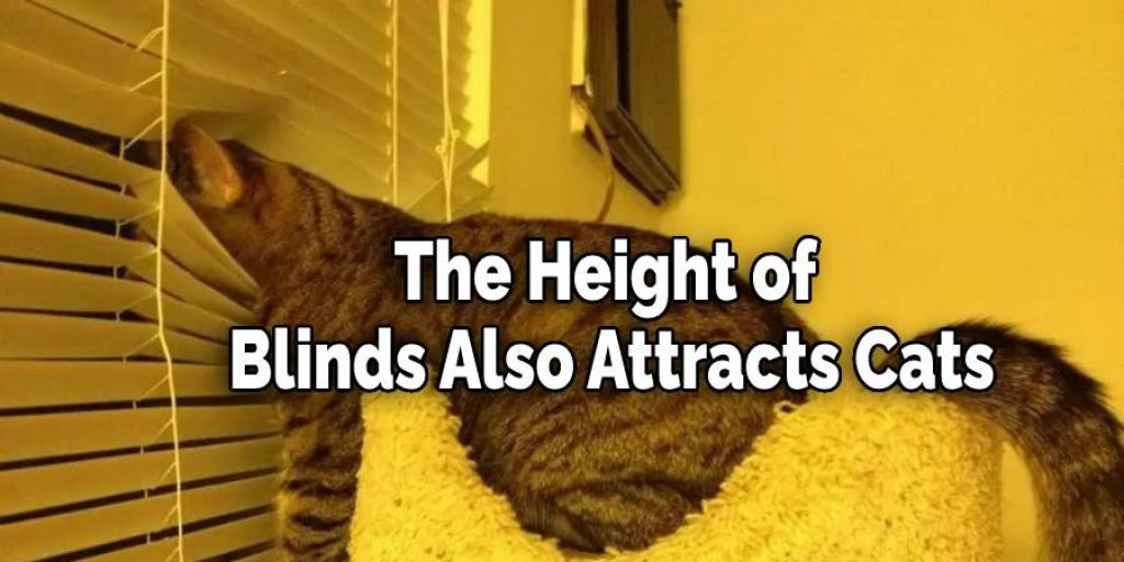 The Height of Blinds Also Attracts Cats