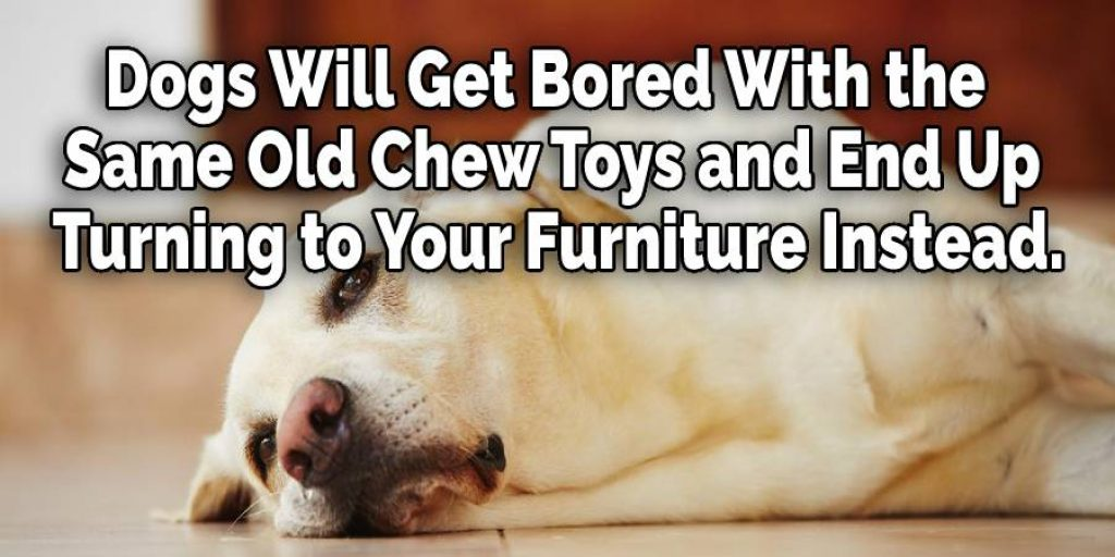 Dogs Will Get Bored With the Same Old Chew Toys