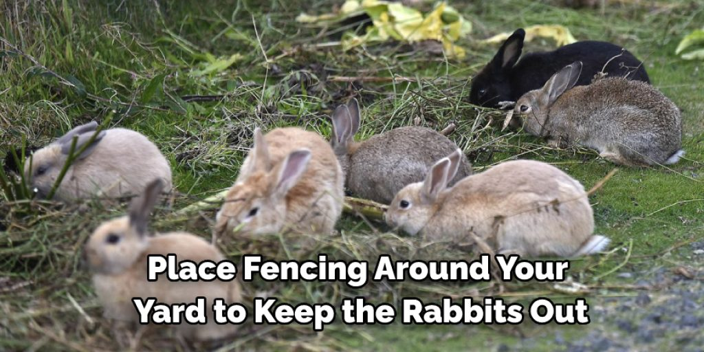 7 Ways to Deal with a Rabbit Infestation at Home