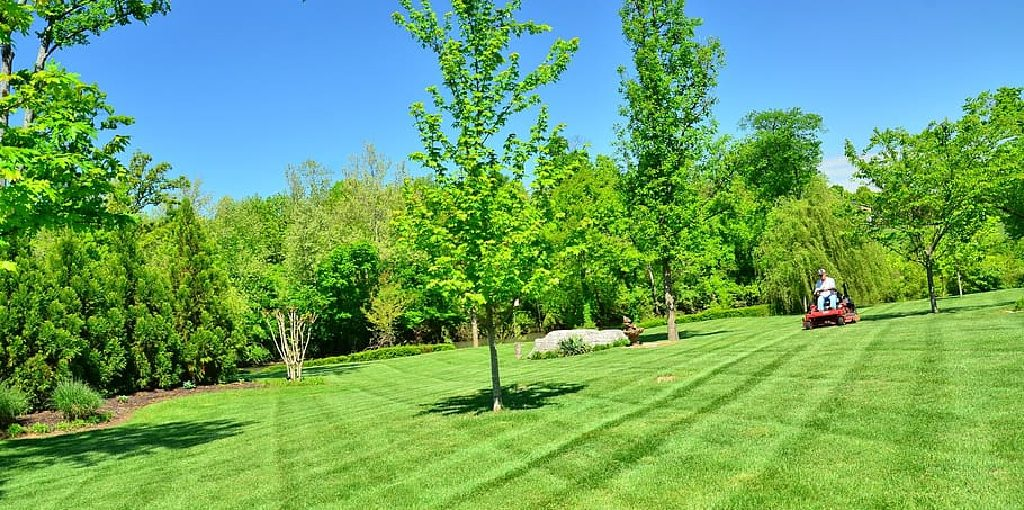 How Often to Get Lawn Mowed