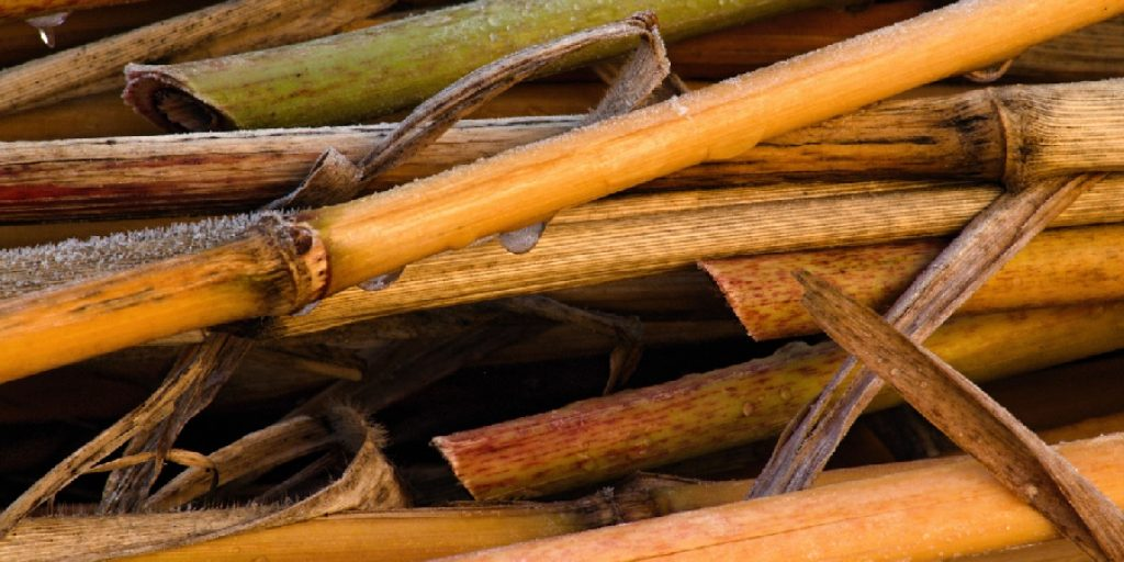 How to Clean Bamboo Straws