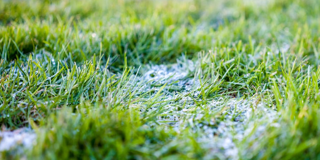 How to Get Rid of Moss in Lawn Organically