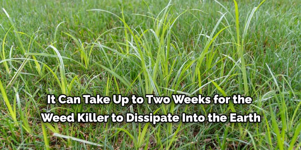 How to Get Rid of Nutsedge with Cornmeal and Epsom salt