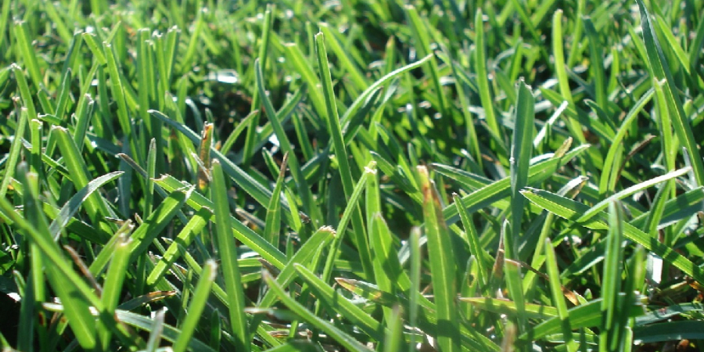 How to Get Rid of Thick Grass in Lawn