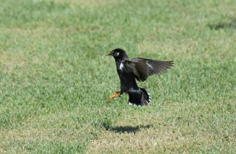 How to Keep Birds Away From Newly Seeded Lawn