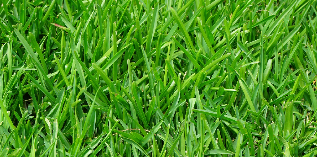 How to Keep Lawn Green With Less Water
