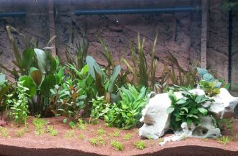 How to Plant Aquarium Grass Seeds