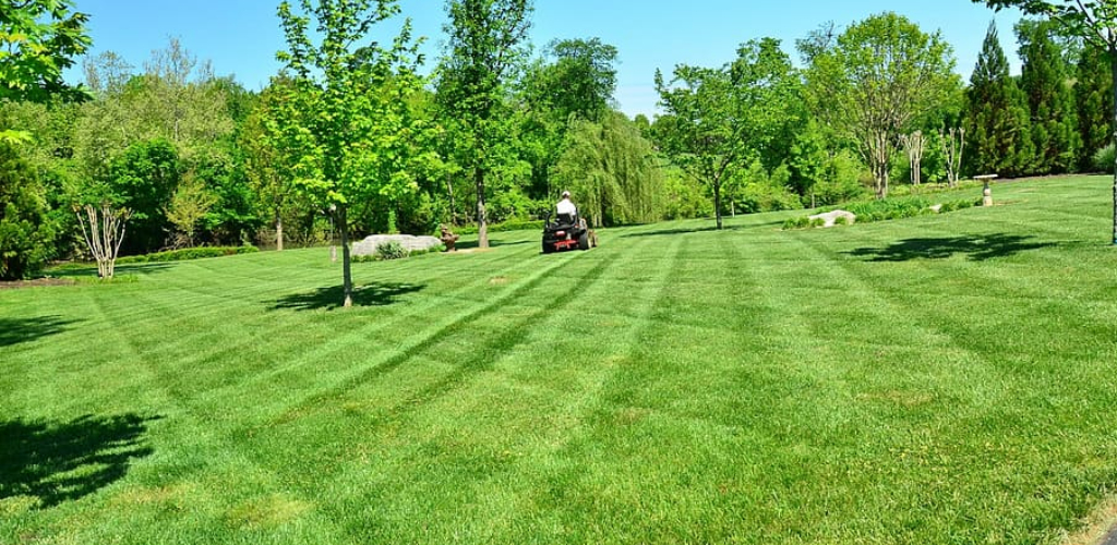 How to Repair a Lawn Full of Weeds