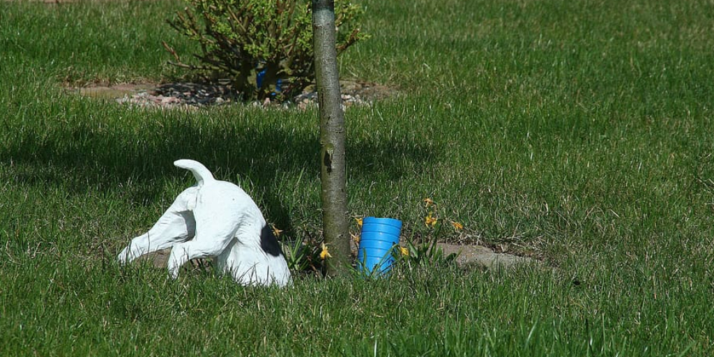 How to Stop Animals From Digging Up Your Lawn