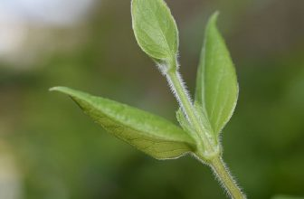 How to Strengthen Plant Stems