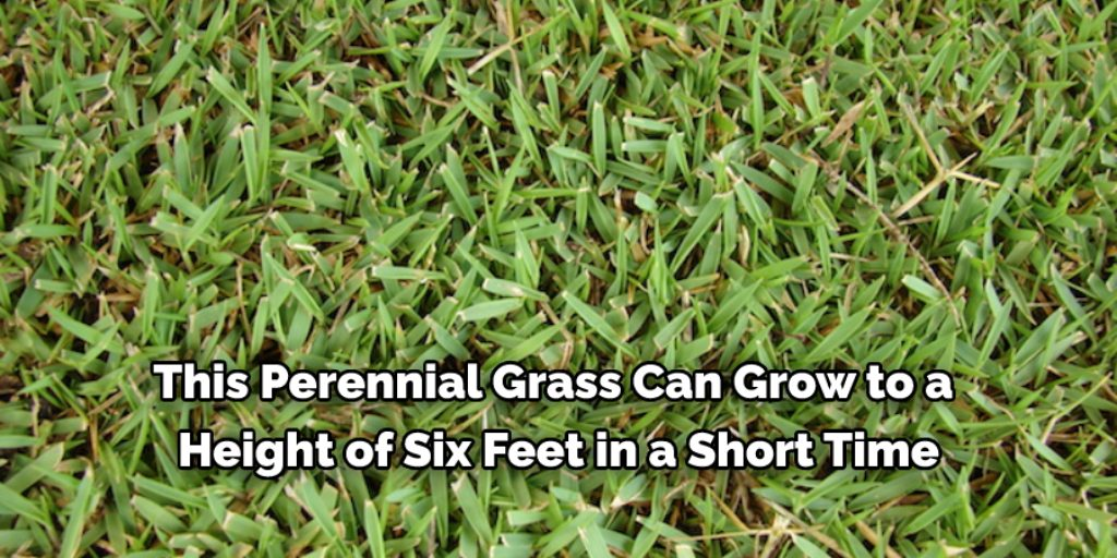 How to identify and control thick grasses