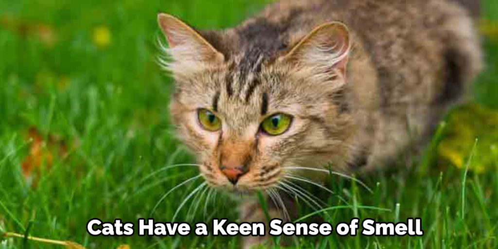 Keep Cats Out with Natural Pest Repellents