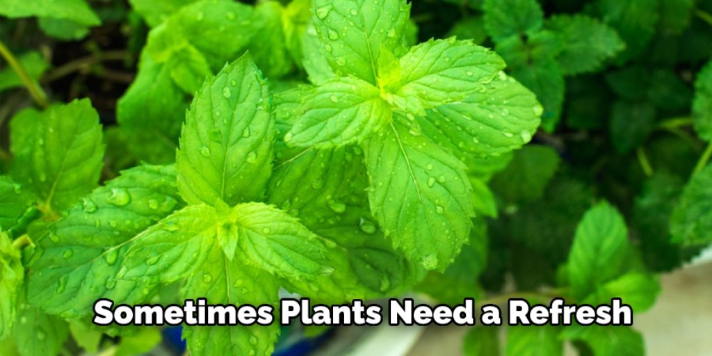 Methods on How to Bring a Mint Plant Back to Life