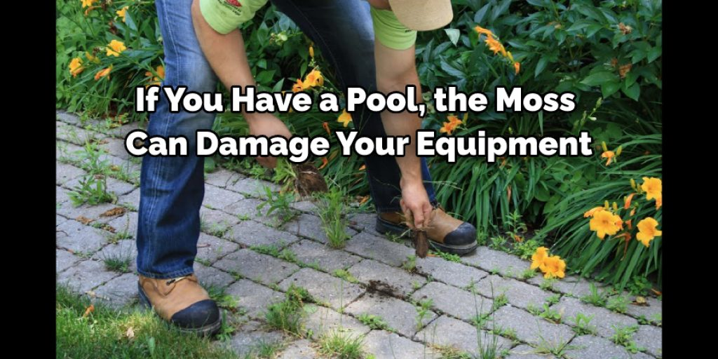 Why Should You Get Rid of Moss
