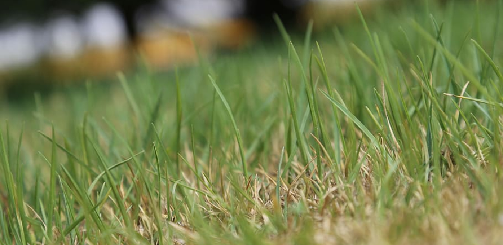 How to Smooth Out a Bumpy Lawn