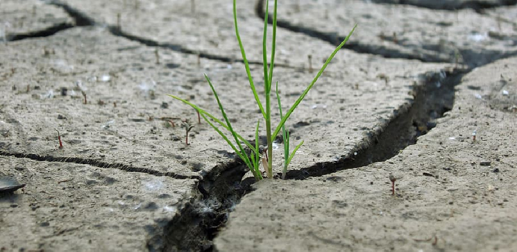 How to Repair a Dry Cracked Lawn