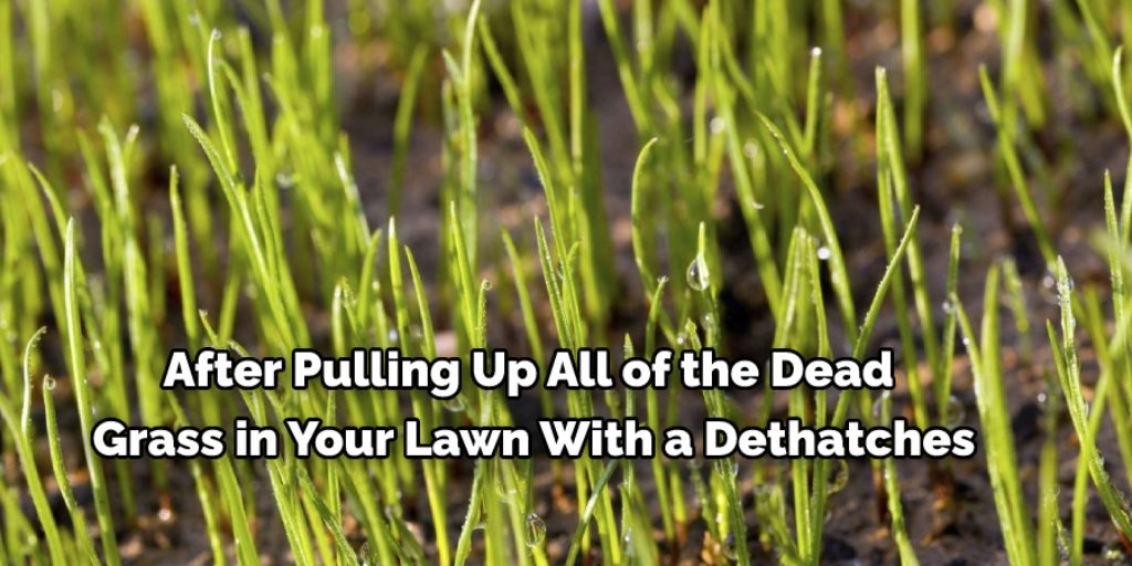 Plant New Grass to Get Rid of Thick Grass in Lawn