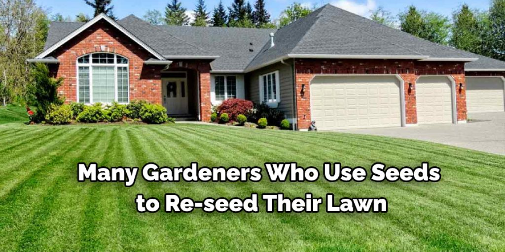 Some Tips to Prevent Birds Landing on Newly Seeded Lawn
