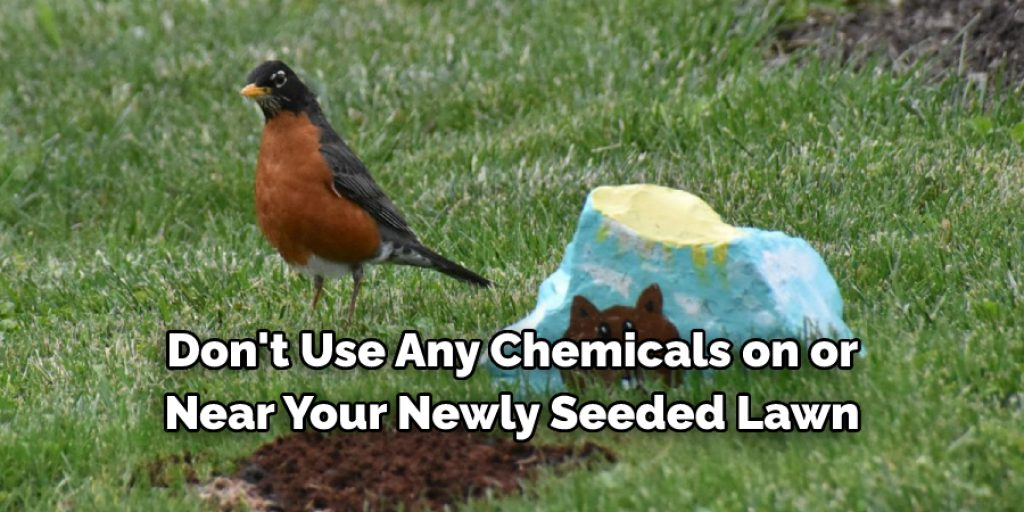 Things to Consider When Keeping Birds Away From Lawn