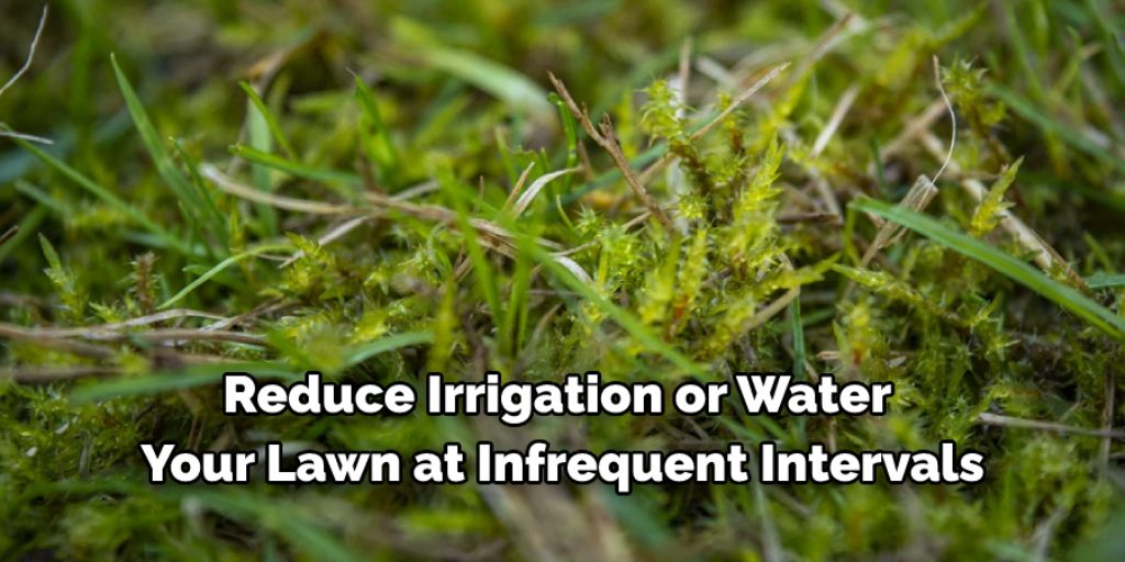 Tips on How You Can Prevent More Moss From Growing in the Future