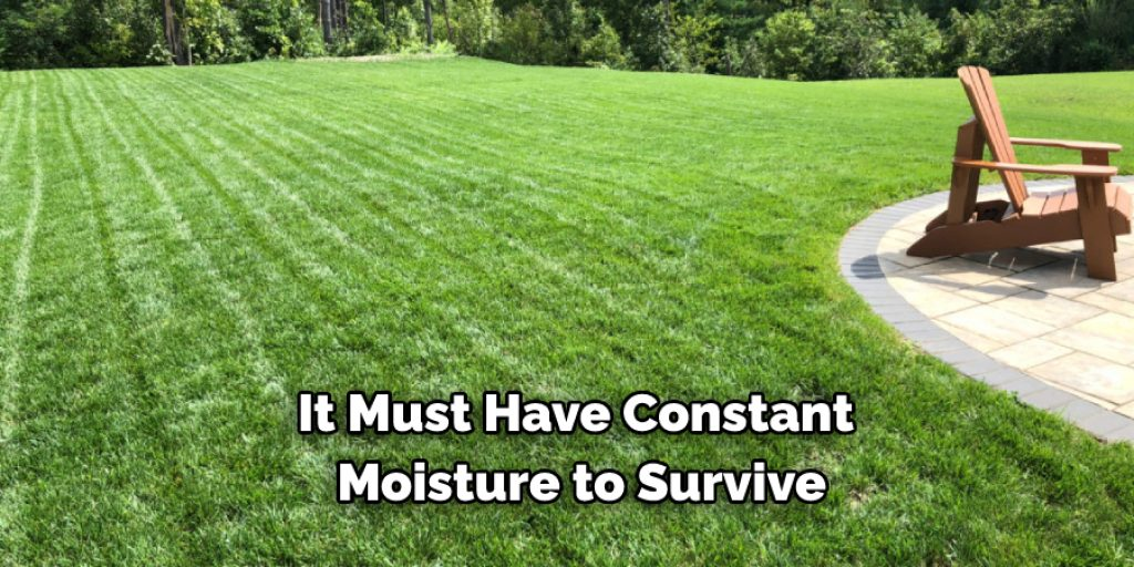 Types of Grass for Different Areas and Climates