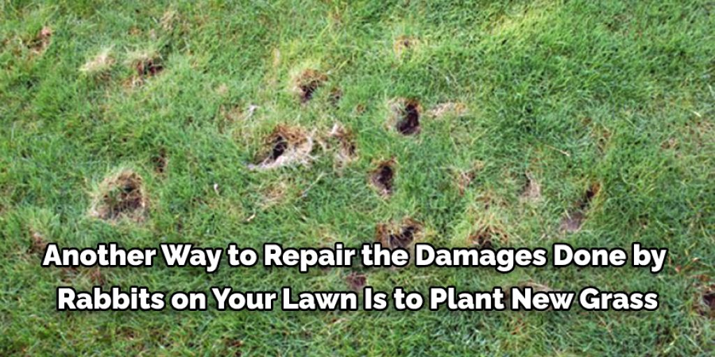Why Are Rabbits Damaging Your Lawn