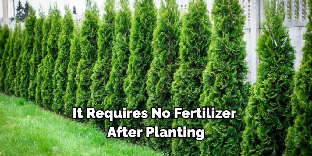 10 Reasons Why You Should Plant Arborvitae Green Giant
