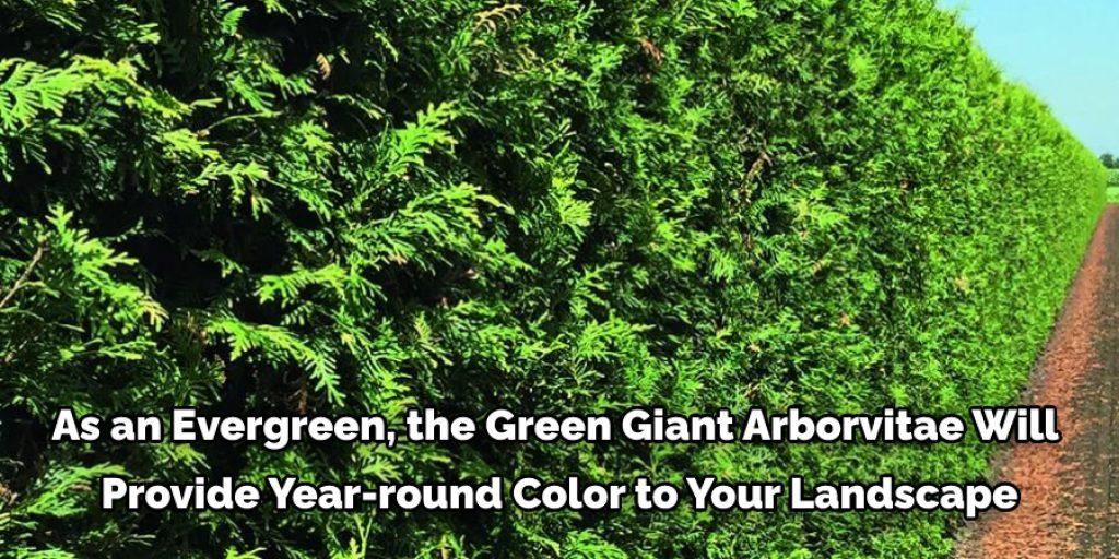 8 Benefits for Planting Arborvitae Green Giant