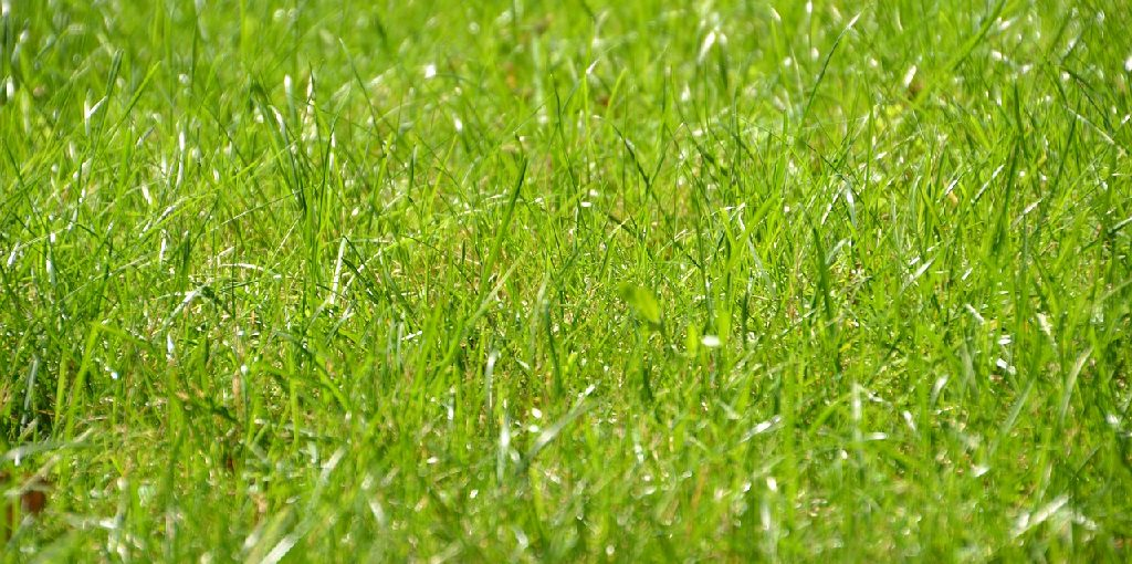 How to Apply Coffee Grounds to Lawn