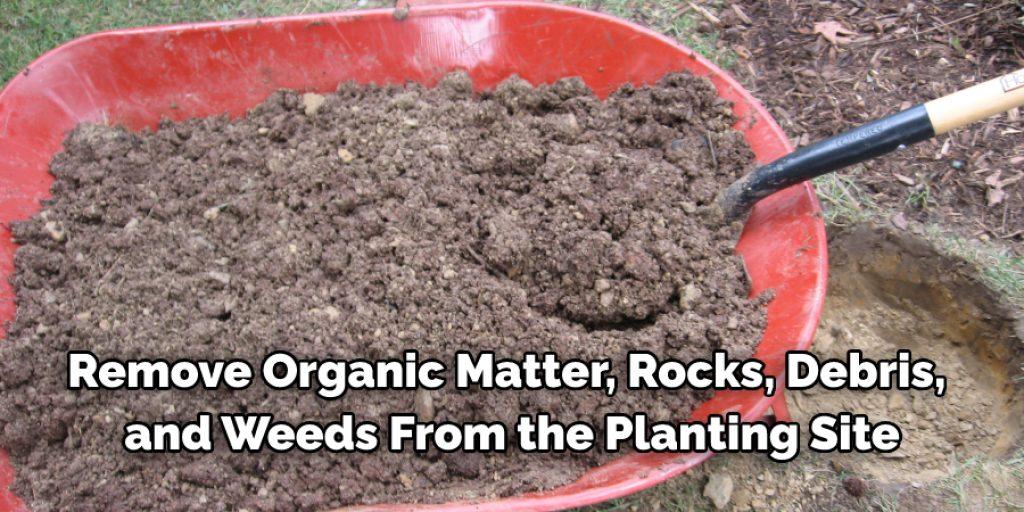 Instructions How Far Apart to Plant Arborvitae Green Giant
